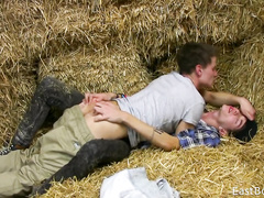 Guys enjoying tender oral job at the hayloft